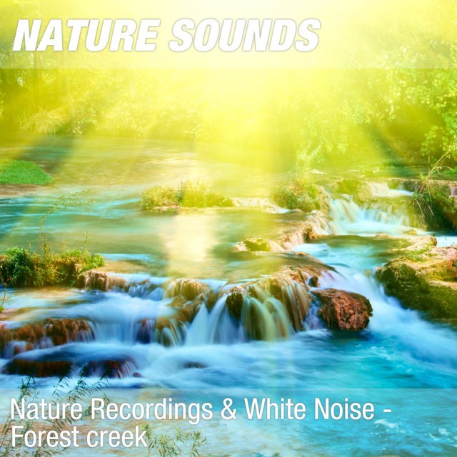 Nature Recordings & White Noise - Forest creek