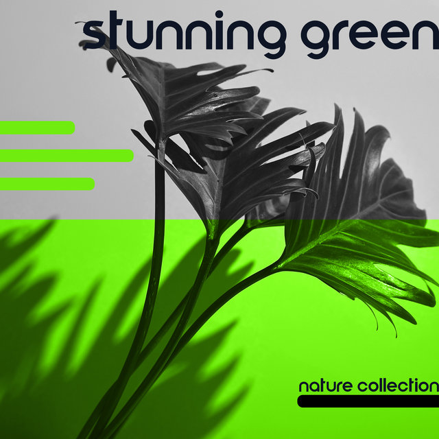 Stunning Green Nature Collection – Ambient Music for Rest, Meditation, Sleep and Relaxation, Healing Therapy, Soothig Noise, Woodland Escape, Meadow, Birdsong