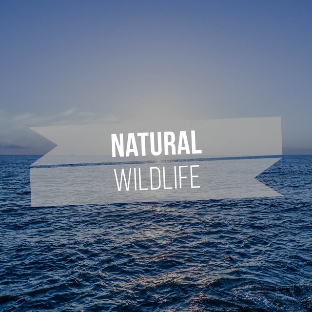 Soft Natural Wildlife Recordings