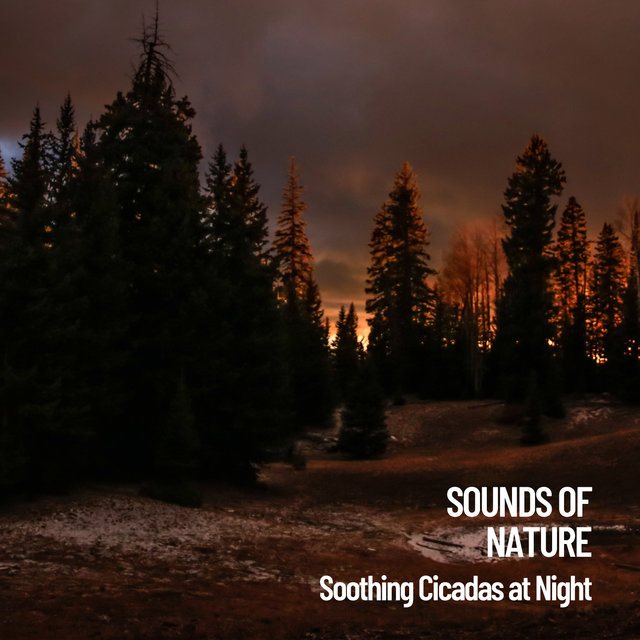 Sounds of Nature: Soothing Cicadas at Night