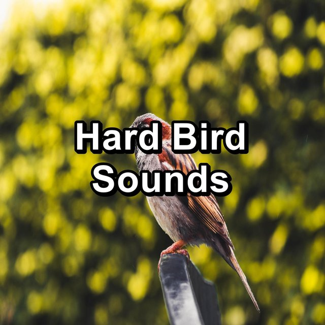 Hard Bird Sounds