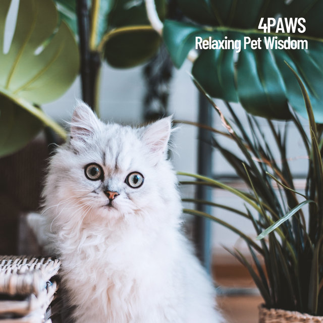 4Paws: Relaxing Pet Wisdom