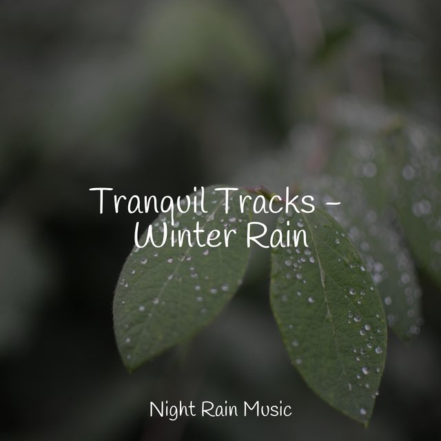 Tranquil Tracks - Winter Rain