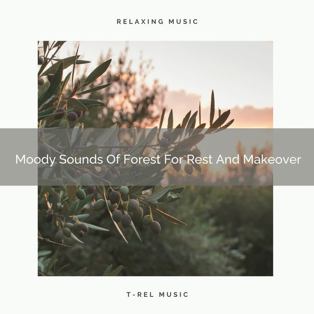 2020 Best: Moody Sounds Of Forest For Rest And Makeover