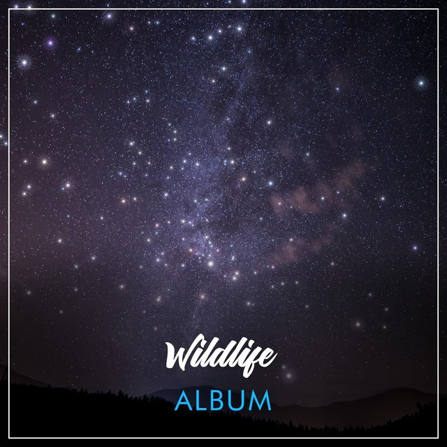 Soothing Sleepy Wildlife Album