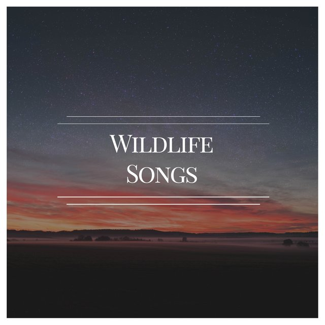 Mellow International Wildlife Songs