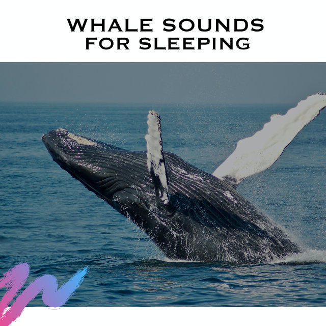 Whale Sounds for Sleeping