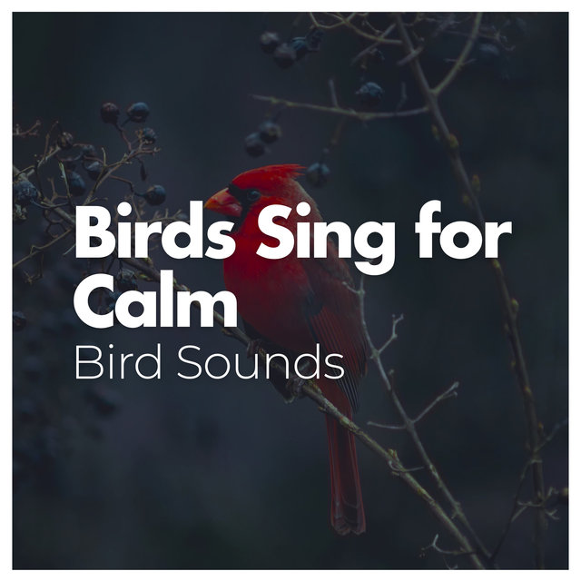 Birds Sing for Calm
