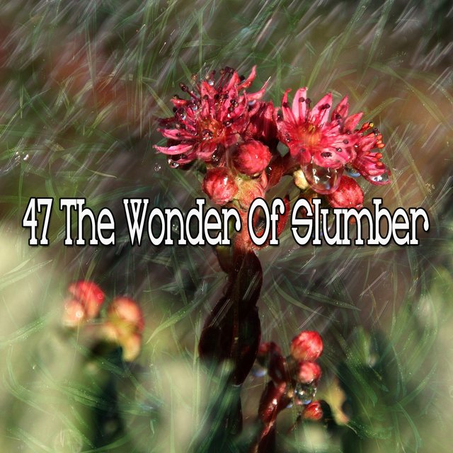 47 The Wonder of Slumber
