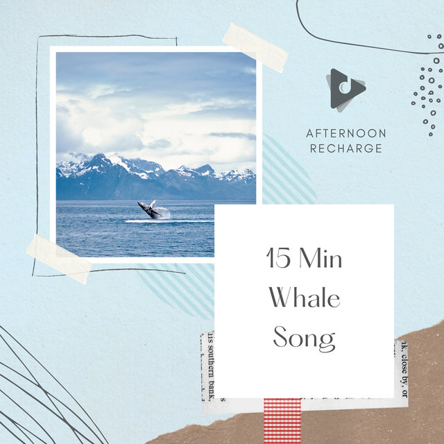 15 Min Whale Song