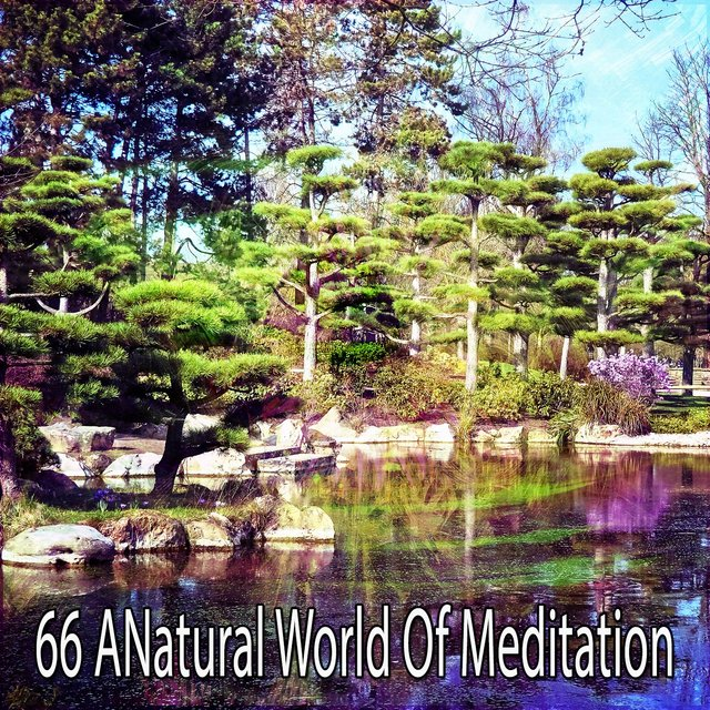 66 A Natural World of Meditation
