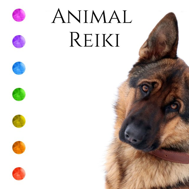 Animal Reiki: Energy Healing for Dogs, Soothing Energy & Music for Your Pets