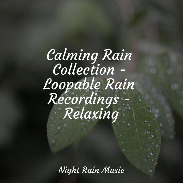Calming Rain Collection - Loopable Rain Recordings - Relaxing