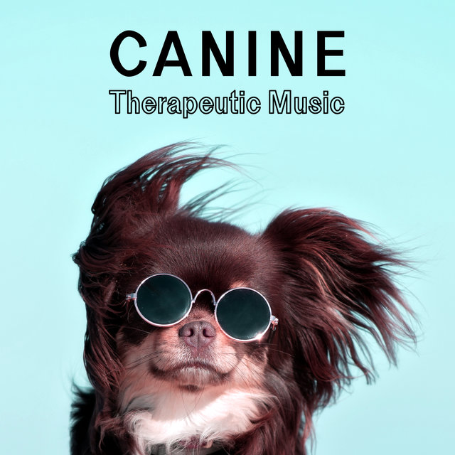 Canine Therapeutic Music – Deeply Relaxing, Calming and Healing Tunes for Your Dog
