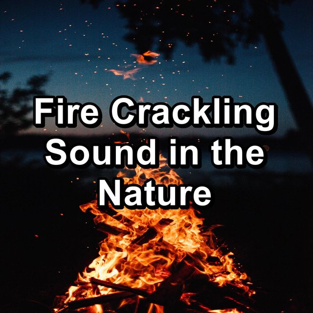 Fire Crackling Sound in the Nature