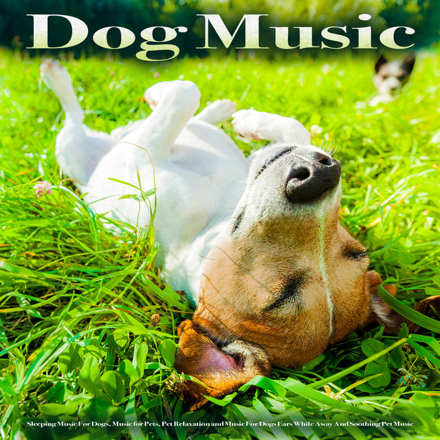 Dog Music: Sleeping Music For Dogs, Music for Pets, Pet Relaxation and Music For Dogs Ears While Away And Soothing Pet Music
