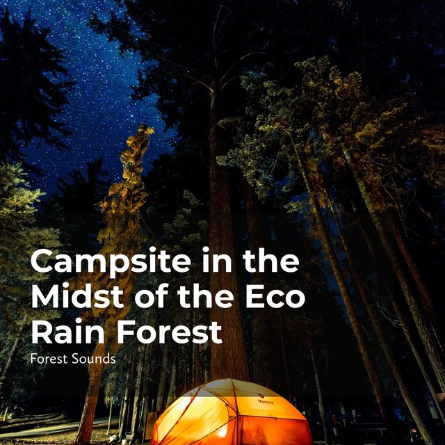 Campsite in the Midst of the Eco Rain Forest