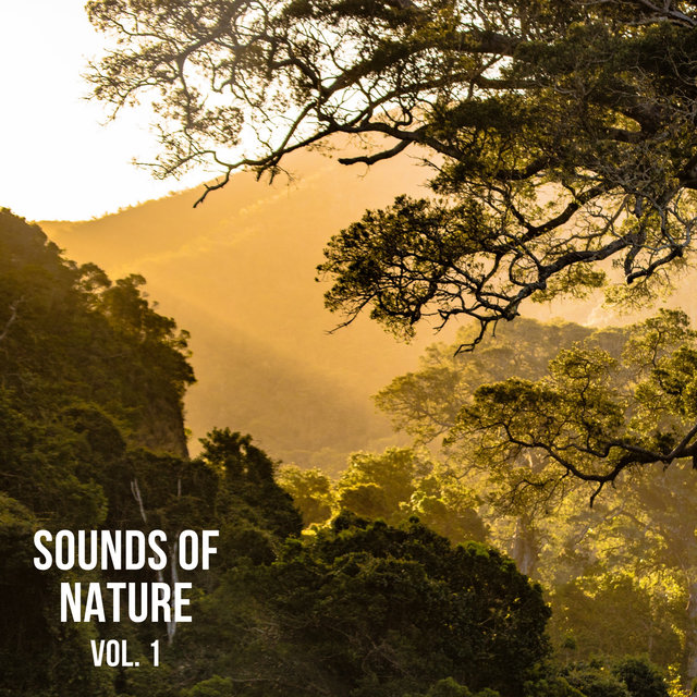 Sounds of Nature Vol. 1, Sounds of Nature Noise