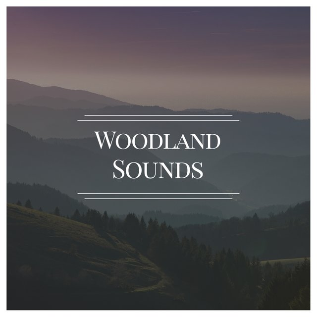 Looping Natural Woodland Sounds