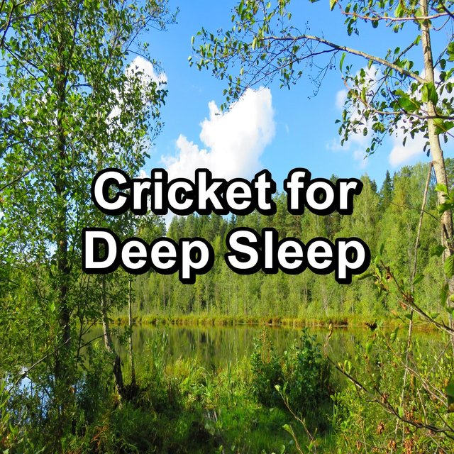 Cricket for Deep Sleep
