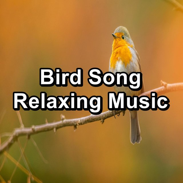 Bird Song Relaxing Music