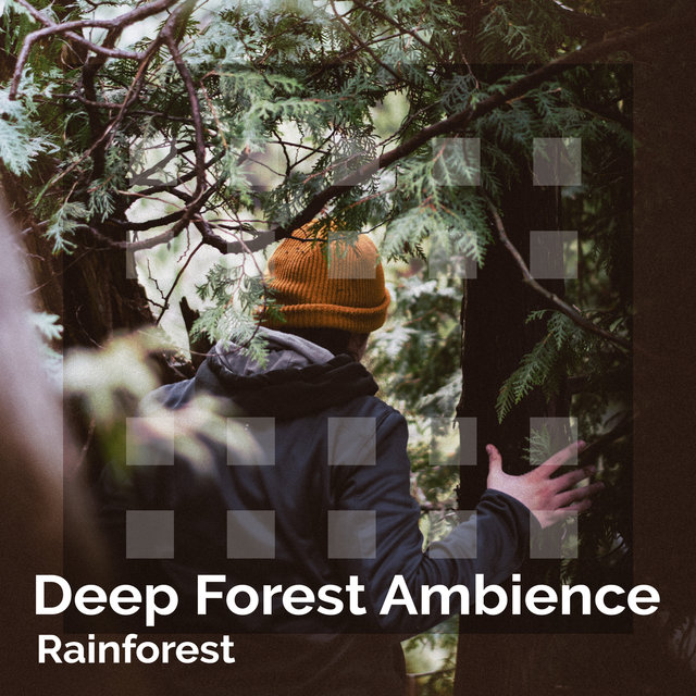 Deep Forest Ambience