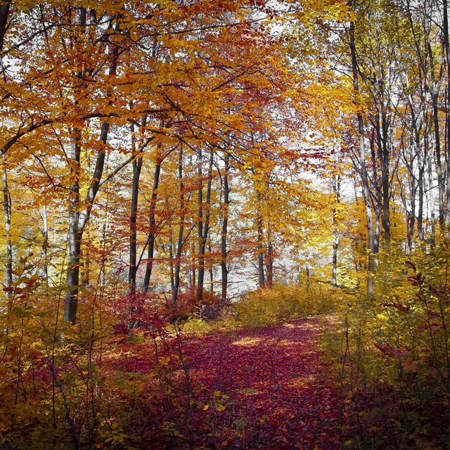 50 Relaxing Sounds of Autumn