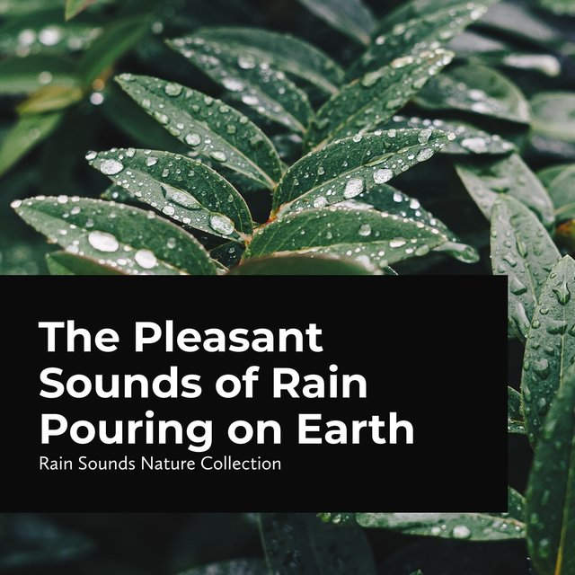 The Pleasant Sounds of Rain Pouring on Earth
