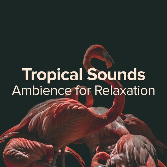 Tropical Sounds for Relaxation