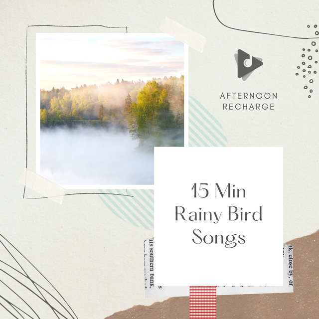 15 Min Rainy Bird Songs
