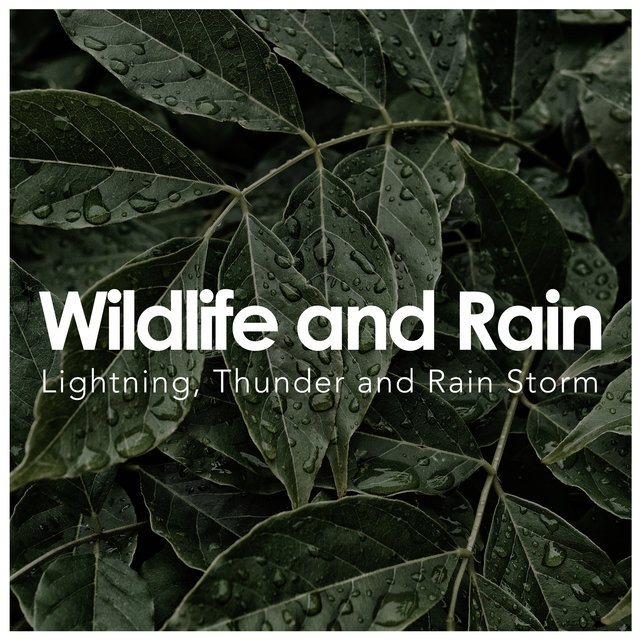 Wildlife and Rain