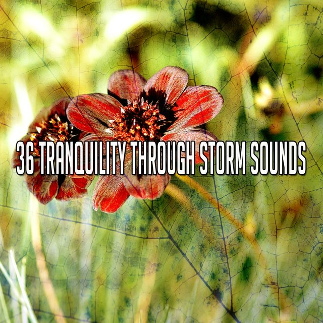 36 Tranquility Through Storm Sounds