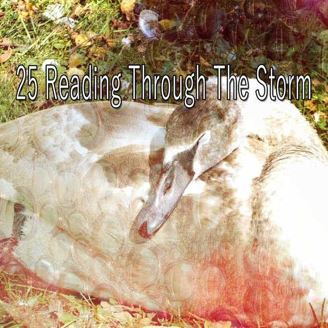 25 Reading Through the Storm